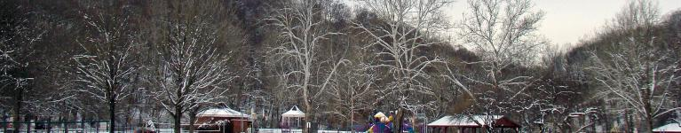 Panorama of woods in snow